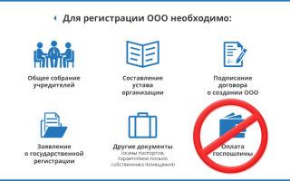 Положение о филиале ООО: пошаговая инструкция и отчетность
