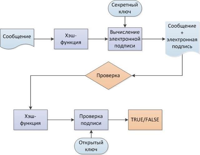 Два типа электронной подписи и виды: алгоритмы использования, определение и отличия
