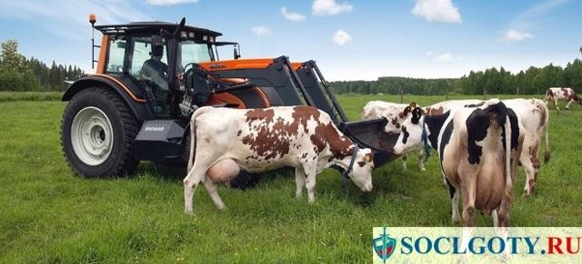 Как получить грант начинающему фермеру в 2019-2020 годах: образец бизнес-плана, условия получения на развитие сельского хозяйства, налоговый учет
